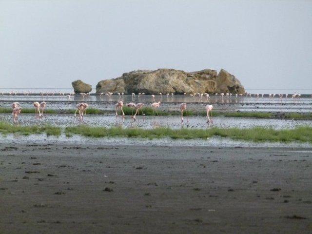 TZ_flamingos_1