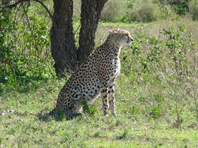 TZ_leopard2