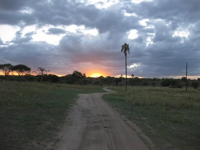 TZ_Tarangire_at_sunset
