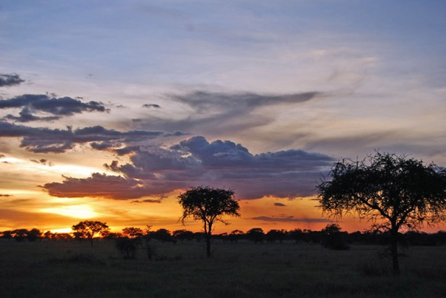 Western-Serengeti-sunset_L