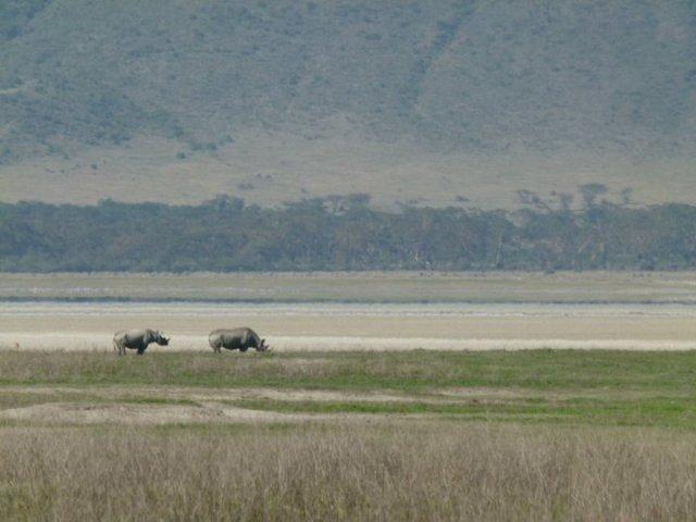 TZ_ngorongoro_rhinos